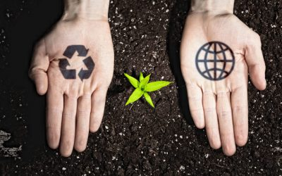 How to Create an Eco-Conscious Plan for Your Business