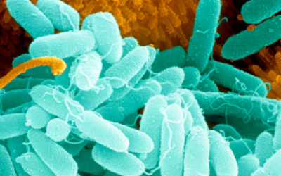 A third of Britons have knowingly been to work with an infectious illness