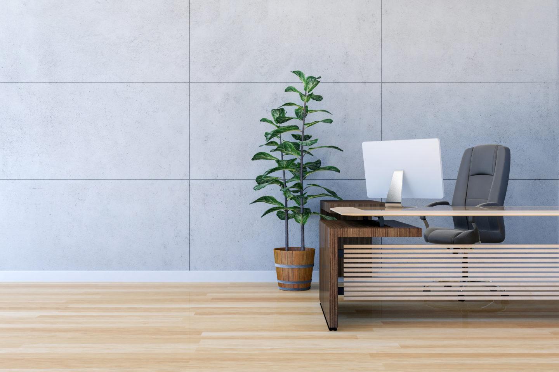 plant next to empty desk