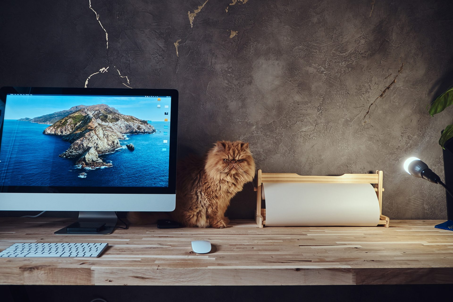 Grumpy Cat on desk with a mac on